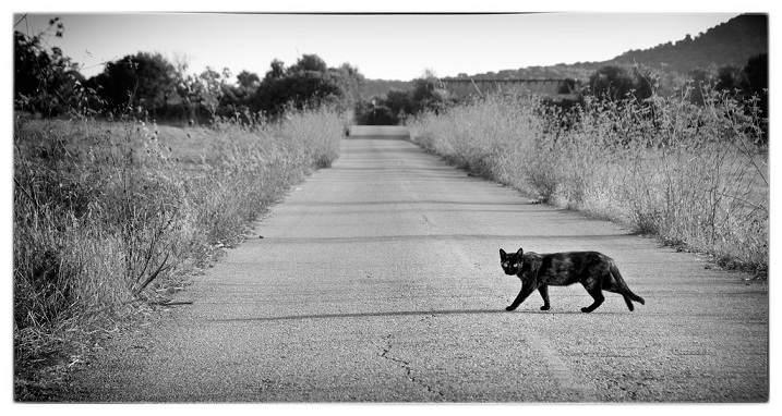 Black cat crossing your path.