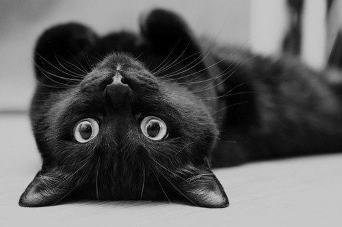 cute-black-cat-detts6f6