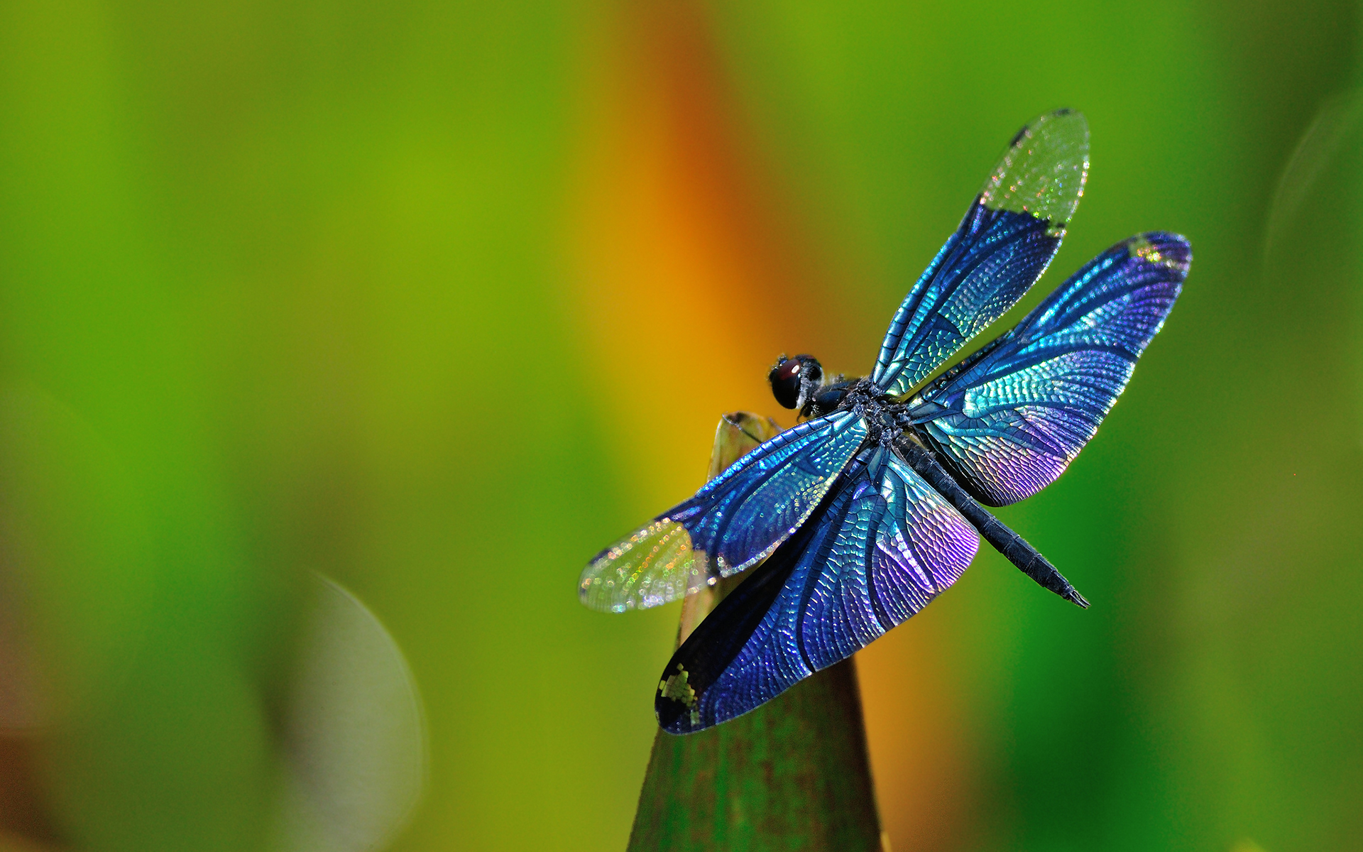Myths & Legends About Dragonflies & Their Symbolism in Feng Shui